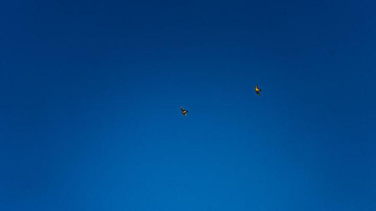 Photo By Dan Gold | Unsplash   #aviationlovers #aviationphotography #aviationgeek #aviationdaily #aviation4u