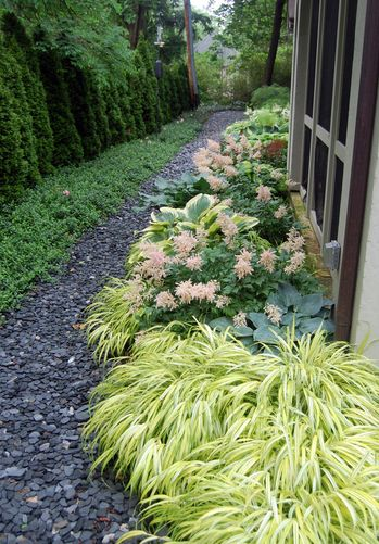 path with groundcover on one side and ornamental grass and astilbe on the other