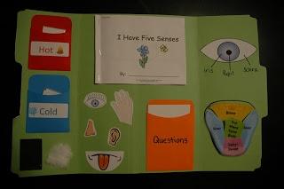 5 senses lapbook