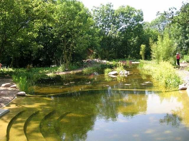 natural swimming pond in Hertfordshire, UK