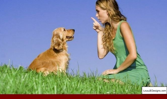How To Train Your Dog To Stay By Your Side And Pics Of How To