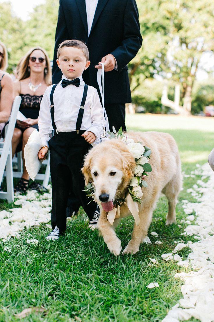 Dogs at weddings, golden retriever, cream floral pet wreath, ring bearer in suspenders // Caroline Ro