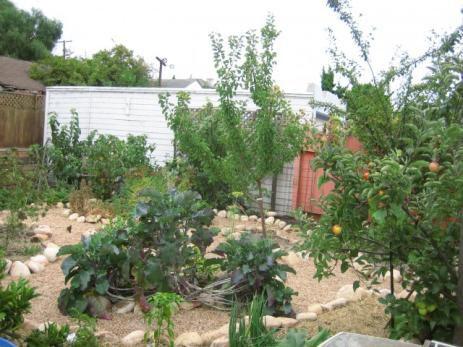 Pedo-épuration : gestion et valorisation des eaux ménagères au jardin
