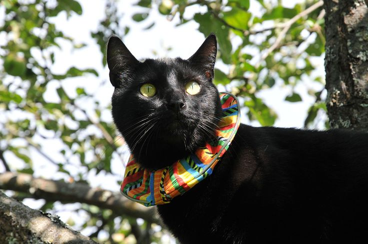 17 Best Images About Birdsbesafe 174 Cat Collar Covers That