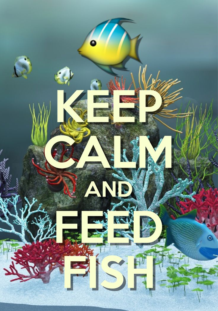 keep calm and feed fish / created with Keep Calm and Carry On for iOS #keepcalm #aquarium