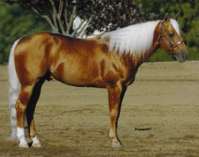 palomino horse color - photo #8