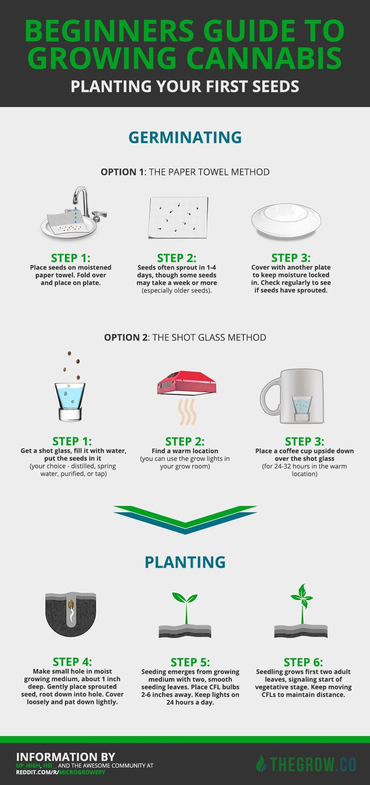 Planting Your First Cannabis Seeds [Infographic]