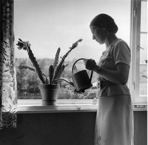 Young woman watering cactus on the windowsill, 1936 Lala Aufsberg