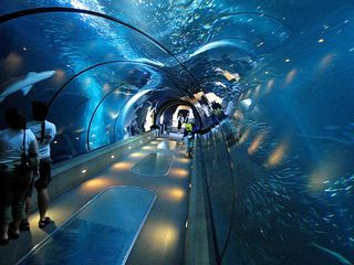 See at least 5 of the Top Ten Aquariums in the US  - Oregon Coast  - Monterey Bay