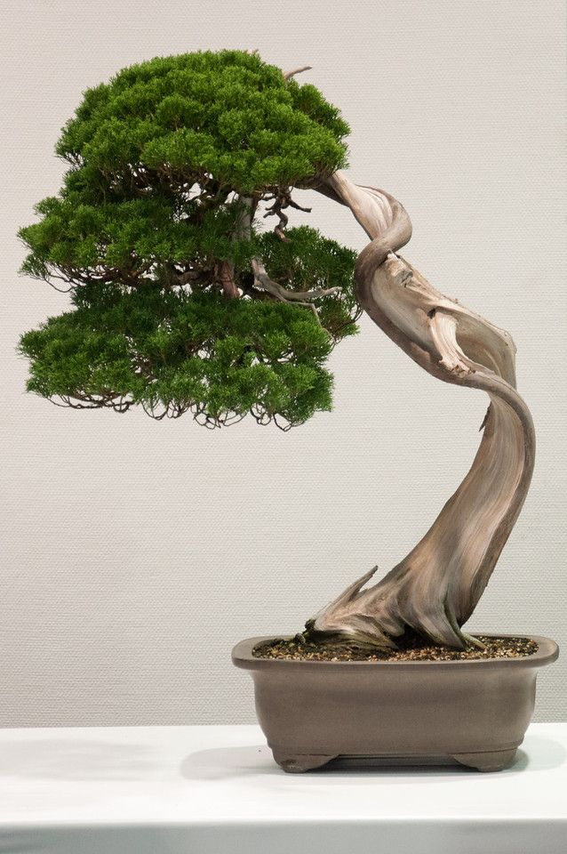 Wow.I really love the look of Bonsai trees.Please check out my website thanks. www.photopix.co.nz