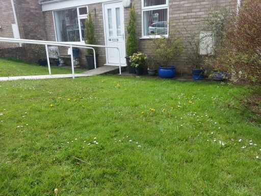 Lawn before treatments