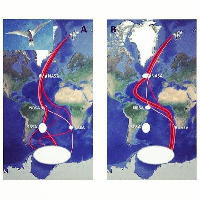 Летом - в Арктике, зимой - в Антарктике | #Антарктика #Арктика #ПопНаука | #профессия #географ #специальность #океанология #метеорология #гидрология исследуем #океан #атмосфера #лед #климат - применяем знания из #школа по #физика #химия #биология #математика #география #экология - выбираем #вуз #спбгу #мгу #рггму и другие!