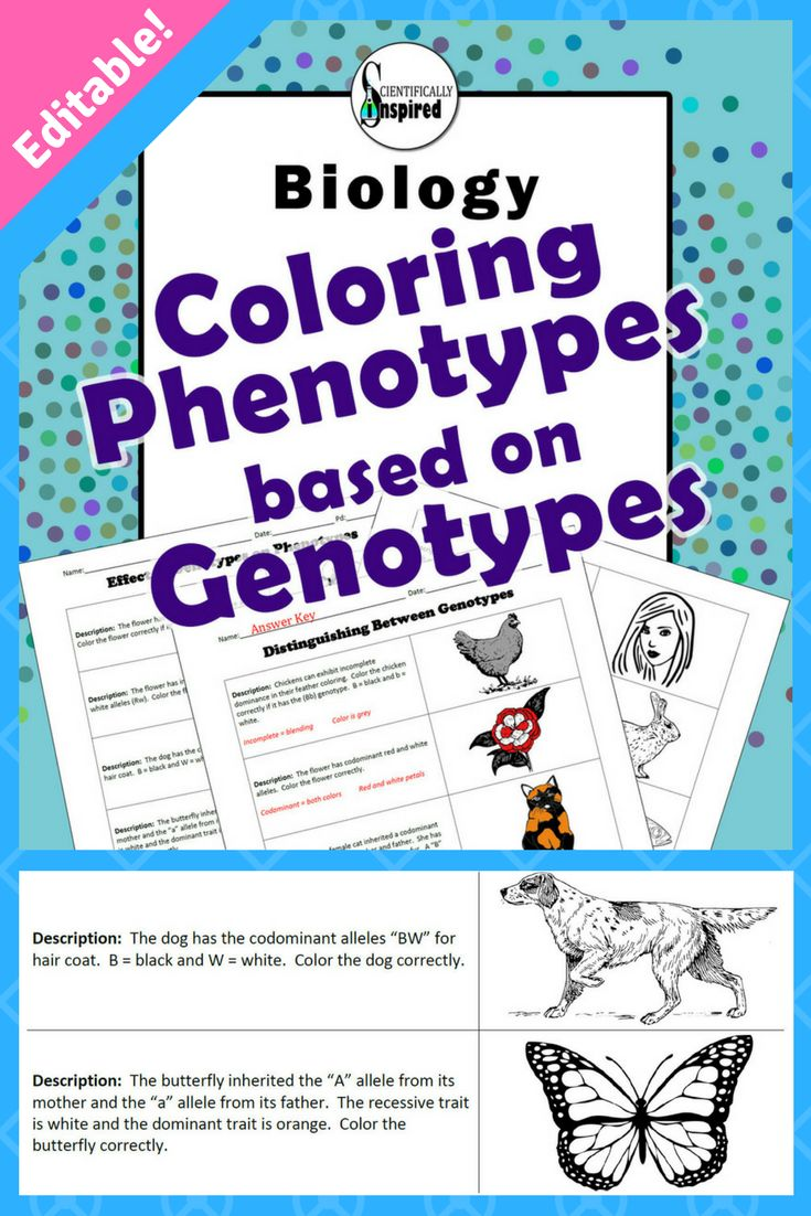 Coloring Phenotypes based on Genotypes (EDITABLE