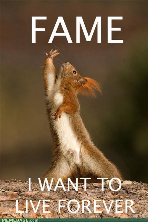 Squirrels! :D