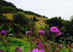 I PADDOCK COME GIARDINIEcotourism Podere Borgo di Vigoleno® « Ecotourism Podere Borgo di Vigoleno®