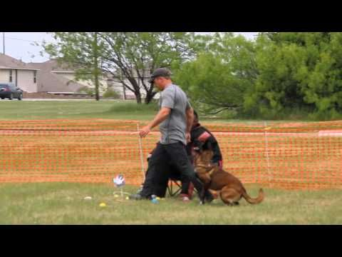 Check Out Our Dog Training Videos All Dogs Unleashed Is Dallas