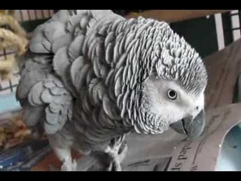 Why parrot rescues and sanctuaries are important. Parrot Rescue.  Please help!
