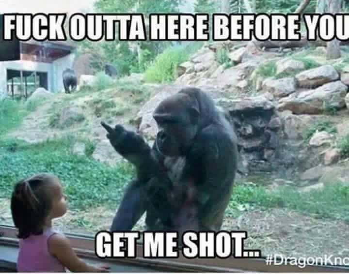 Gorilla zoo   http://ift.tt/1O3fq34 via /r/funny http://ift.tt/1P2jF9U  funny pictures