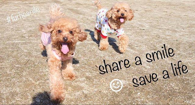 . . @yixx9 さんから #笑顔のバトン を受け取りました☺︎ . アメリカで甚大な被害をもたらした 2つのハリケーンで被災したペット達のために @furbo_japan さんがアメリカの団体 @humanesociety に支援金を寄付されるそうで 更にInstagramでシェア毎$1US 寄付金に 追加されるそうです。 . 被災したペット達も 笑顔になれるように 愛犬愛猫の笑顔の写真のキャプション(この欄)に ハッシュタグ #furbosmile を付けて投稿して下さい😋 . 期限は 2017年9月19日 23時59分までだそうです。 . 勝手にタグ付けさせて頂きました😚 笑顔のバトンを繋げて頂けたら嬉しいです🙈💕 . よろしくお願いします( ⁎ᵕᴗᵕ⁎ )🙏❤︎ . . #トイプードル #トイプードルレッド #トイプードル大好き #トイプードル多頭飼い #トイプードル部 #トイプー #多頭飼い #愛犬 #オハナとコノハ #わんこ #わんこなしでは生きていけません会 #いぬすたぐらむ #いぬら部 #犬バカ部 #ふんもこ部 #ランラン #dogs…