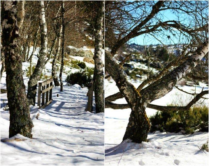 Deixa entrar o sol | Penhas Douradas | Serra da Estrela :: Portugal