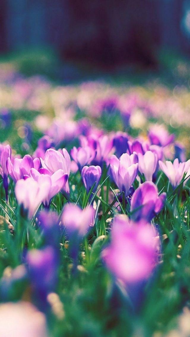 Purple Narcissus Flower Garden Landscape #iPhone #5s #wallpaper