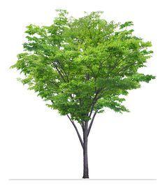 tree photoshop - Google 검색