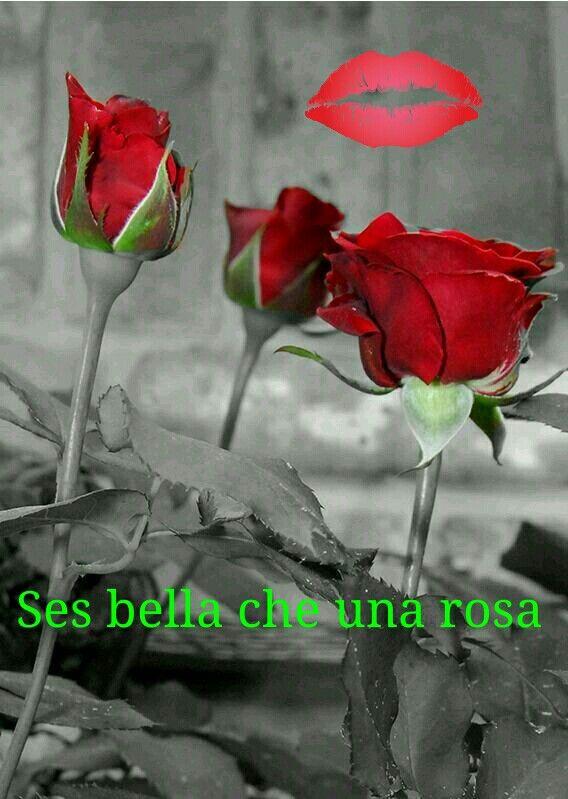 Sei bella come una rosa