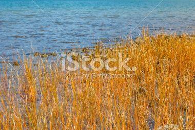 Orange Sedge Grass and Lake Royalty Free Stock Photo