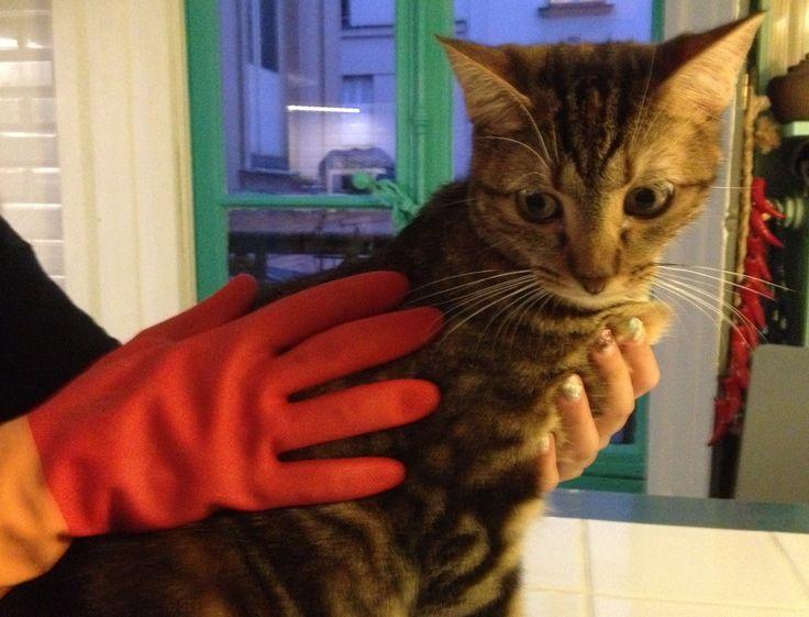 gant vaisselle poils de chat