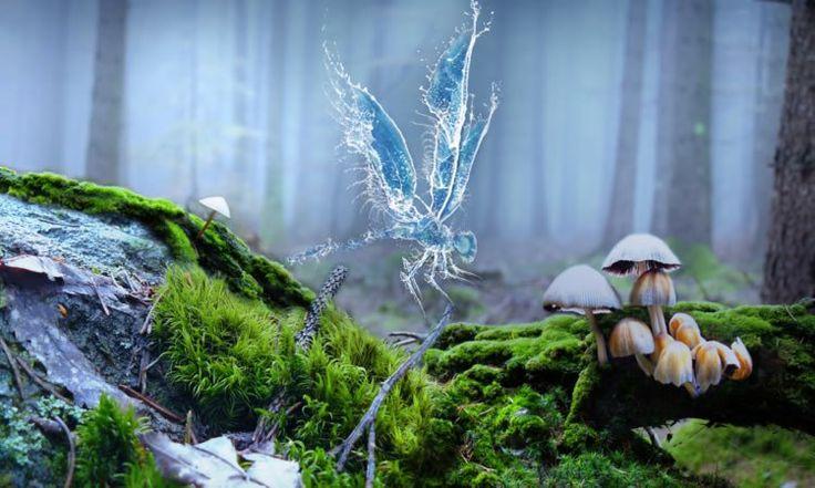 11 niveauxpour communiquer avec les esprits de la natureLes esprits de l'air (elfes, sylphes, fées de l'air…), les esprits de l'eau (ondins, ondines,