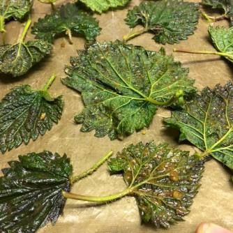 Nettle Chips   from Gather