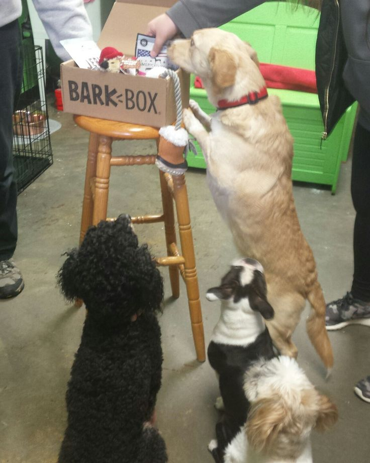 Our 1st Bark Box arrived and dogs were very excited