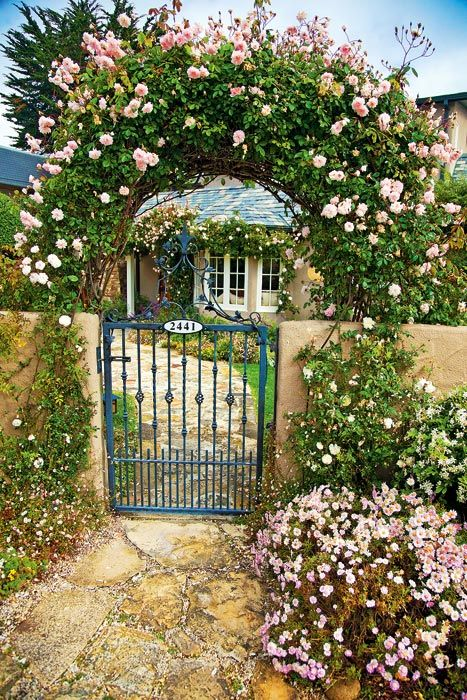 These appear to be Cecil Bruenner roses, my absolute favorite. The cottage is in Carmel, CA. Photo by Mike Barton Photography.  A great website.
