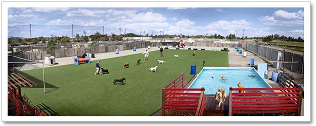 Indoor Dog Boarding Design | PlayDogPlay Doggy Daycare and Dog Boarding facility in Petaluma