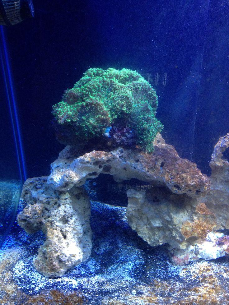 9 best saltwater aquarium images on pinterest saltwater for Marine fish store