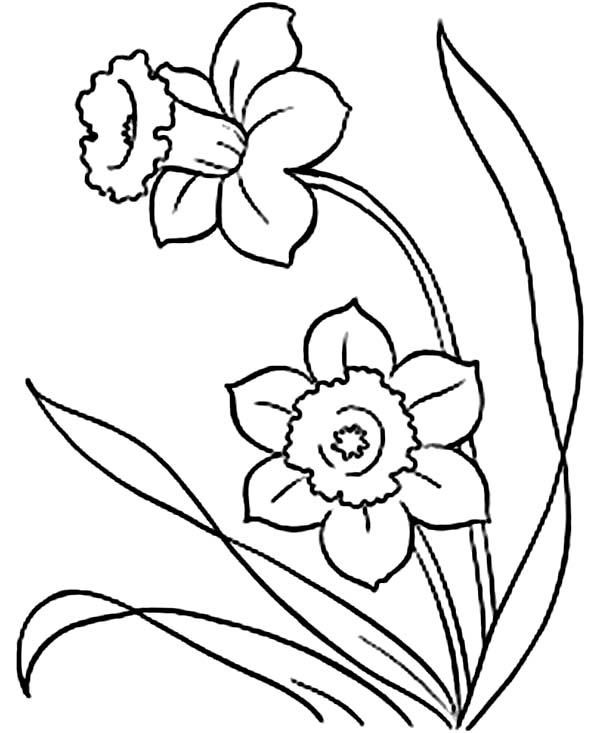 Flower Coloring Pages Spring Coloring Pages Flower Drawing Flower Coloring Pages