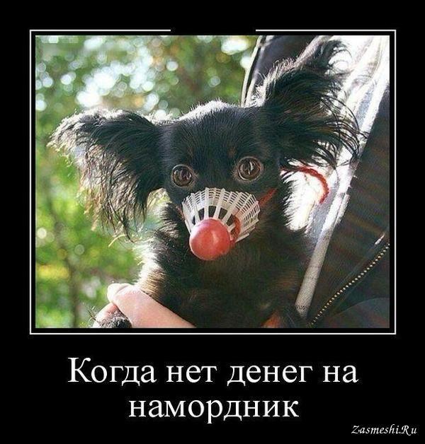 Фото: Подборка смешных и добрых демотиваторов про лучших друзей человека