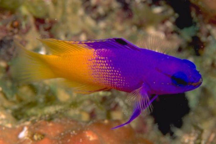 Dallas World Aquarium Fish