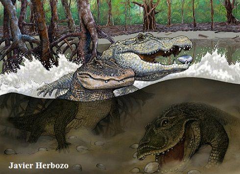 Siete especies de cocodrilos coexistieron en un mismo enclave de la Amazonia peruana durante el Mioceno