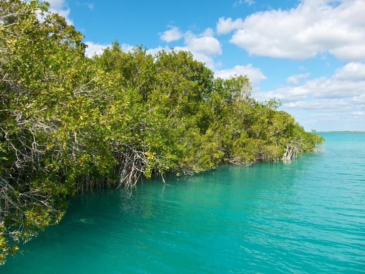 Bacalar Mangroves