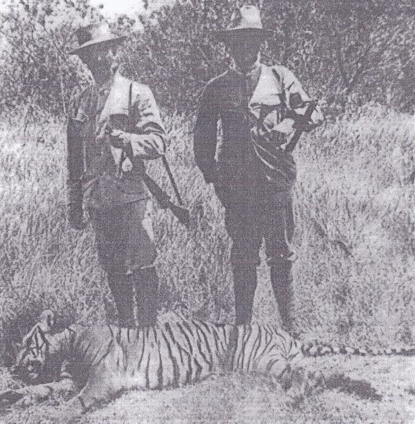 77 Best Towards Extinction : Indonesian Tiger !! Images On