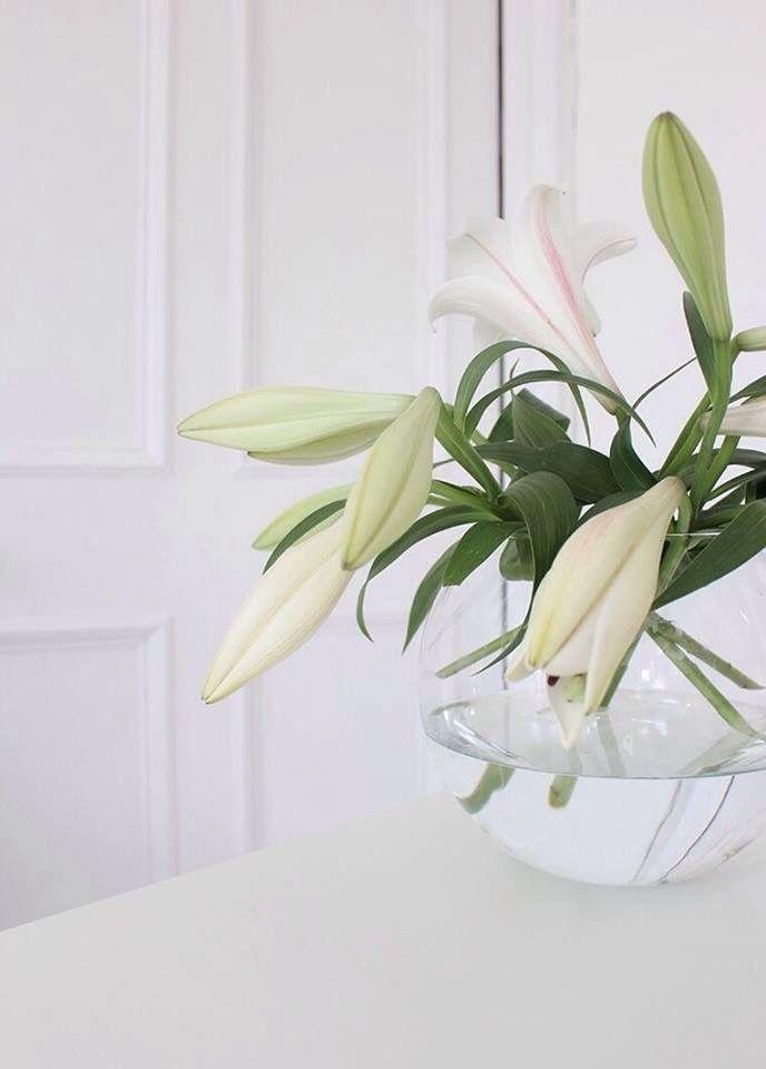 28 besten Weiss Bilder auf Pinterest | Blumenarrangements, Gärten ...