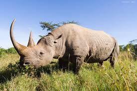 Resultado de imagen de rinocerontes fondo de pantallahd