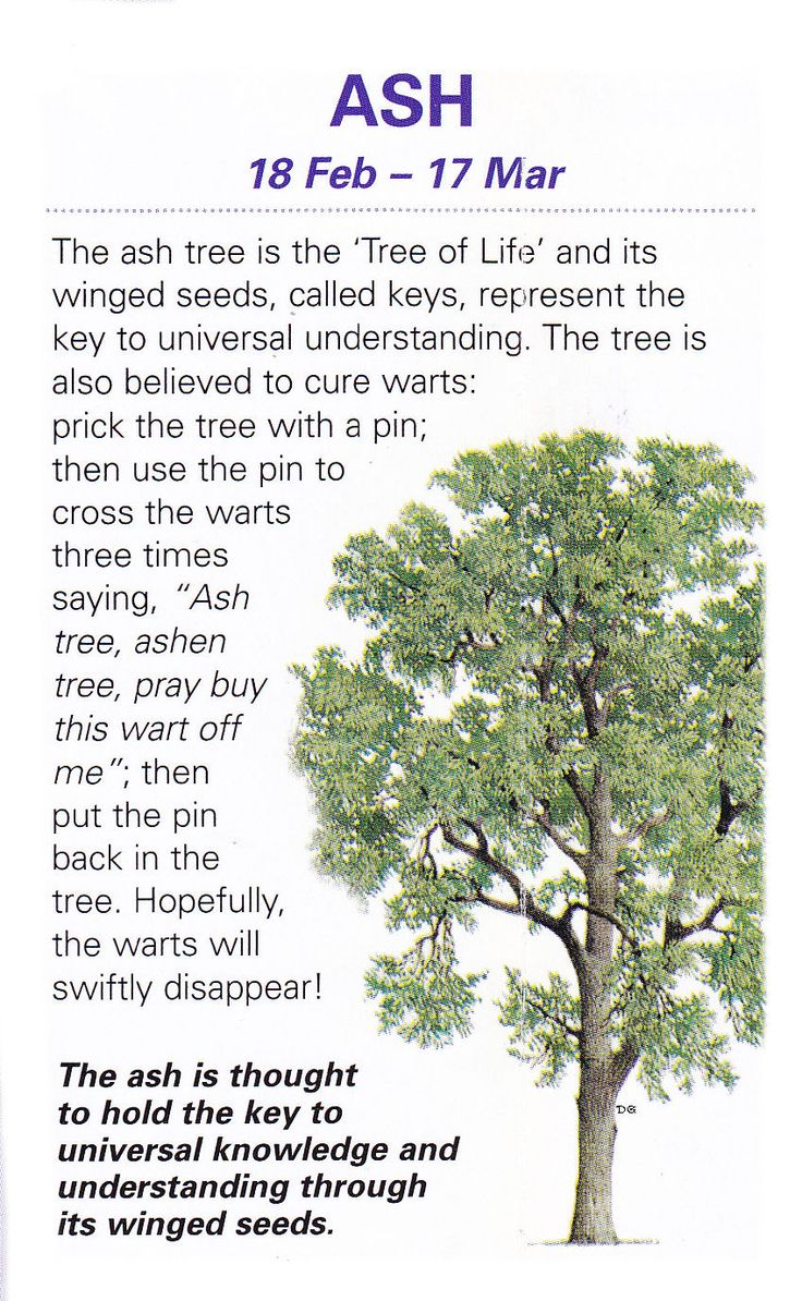 Sacred celtic trees Ash