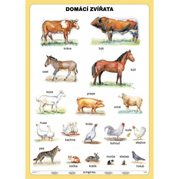 domácí zvířata - Hledat Googlem