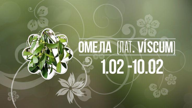 Омела 1.02 -10.02 ✿ Цветочный гороскоп