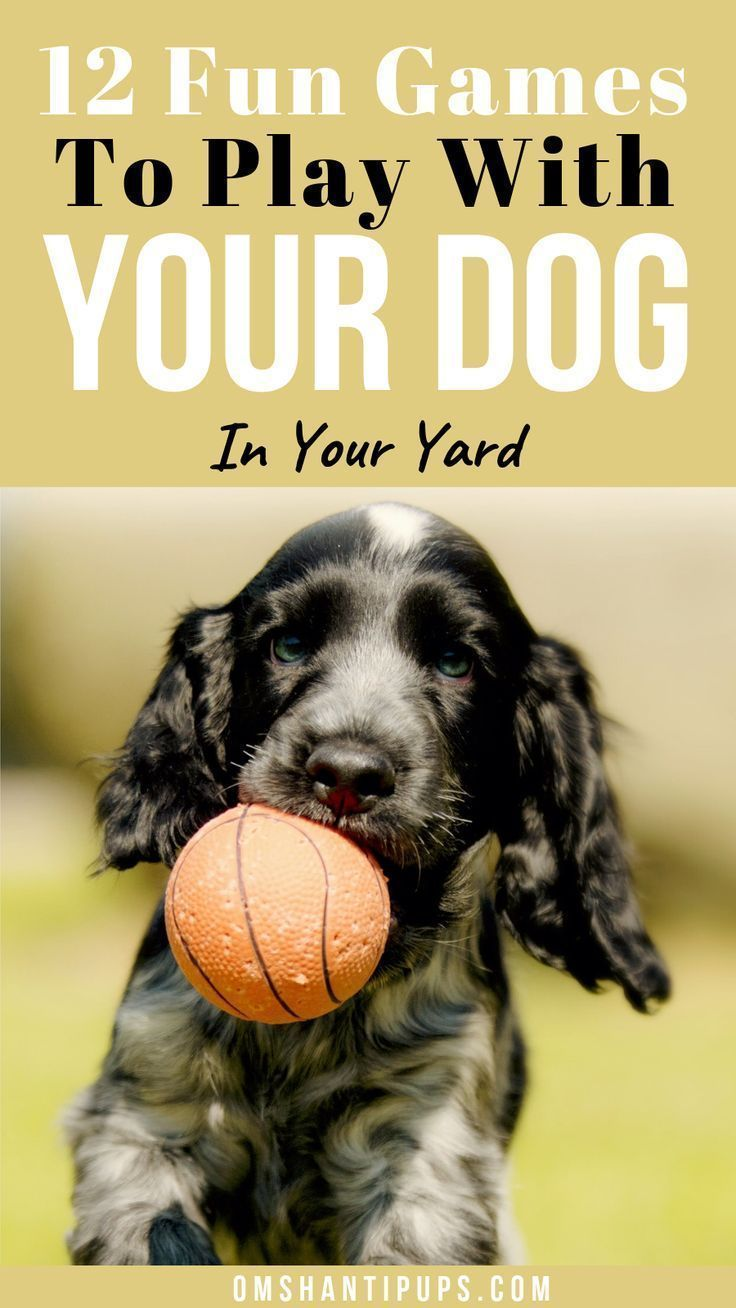 Entertaining Backyard Games To Play With Your Dog In 2020 Dog Entertainment Backyard Games Dog Backyard