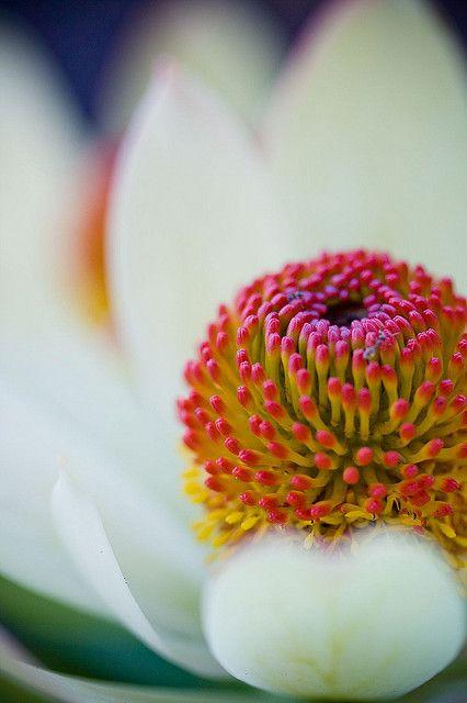 photo by narelle sartain: Beautiful Flower, Gardens Design Ideas, Modern Gardens Design, Gorgeous Flower, Flower Gardens Design, Flower Photos, Macros Daisies, Macros Photography, Interiors Gardens