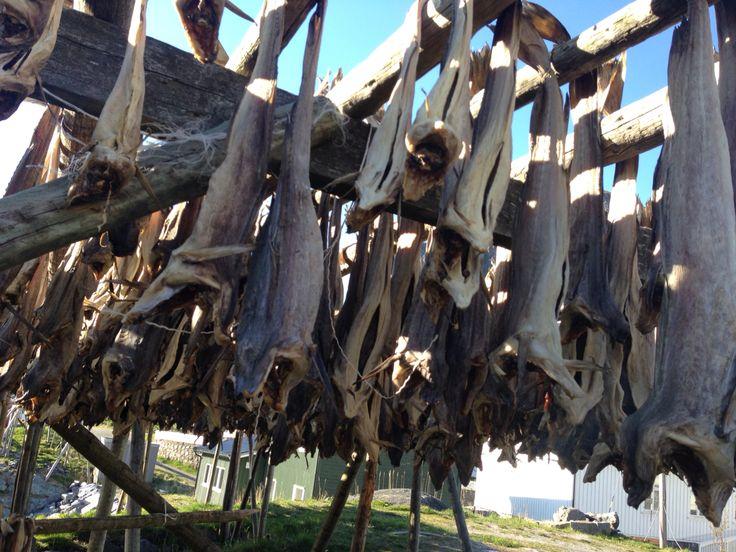 Fish fish, everywhere ! #norway