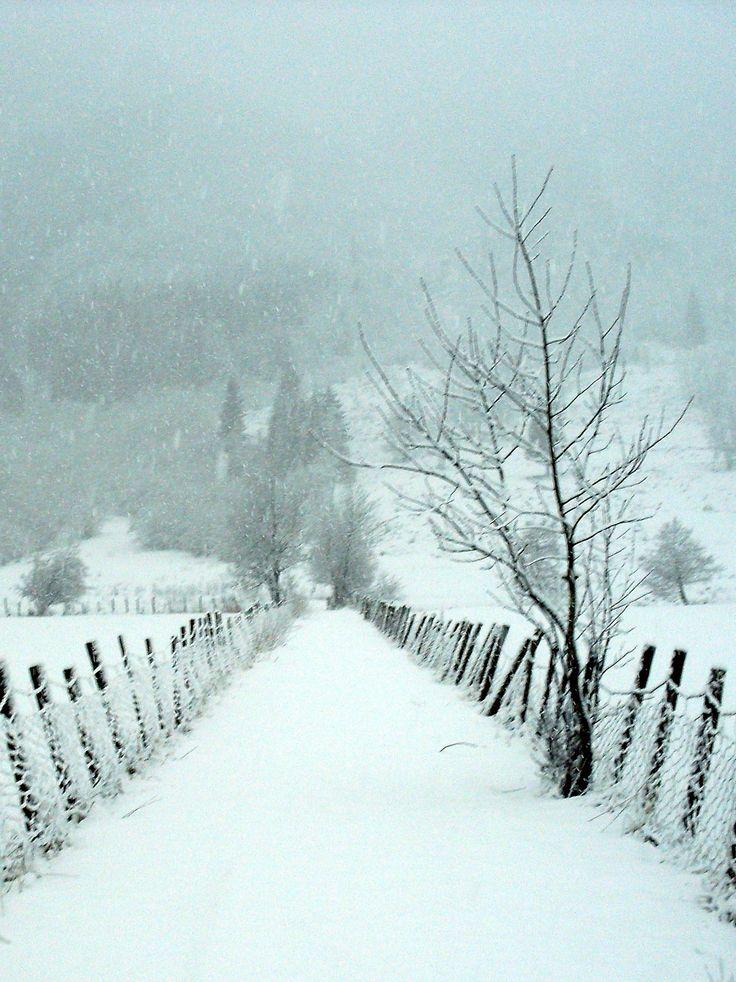 🇳🇴 Verschneite Straße zur Wiese (Sogn og Fjordane, Norwegen) von Knut P. Bøyum c …   – 1 Country roads and trails